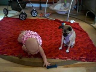 Собака учит 6-месячного ребёнка ползать