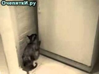 Самостоятельный кот и холодильник.