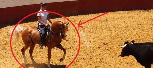 лошадь мерлин жива или нет