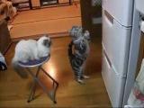 Кот просит открыть холодильник
