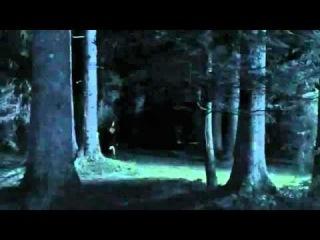 Грибы  3D (2011) Русский трейлер.