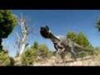 Allosaur Faint - contains bits of Giganotosaurus and a small ball - check description