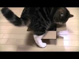 Funny and fail CATS compilation - 01