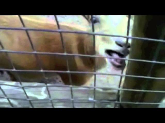 Skrillex - Cinema (Goat Remix) GoatStep Месииит)
