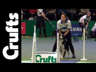 Flyball - Team - Semi Final - Crufts 2012