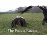 K9 Xena Protection dog - pocket rocket