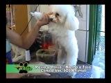 Banho e Tosa SOS Animal PARTE 2 - Programa Animais em Ação