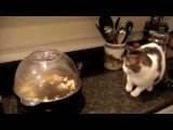 Cat Fail Compilation Funny!