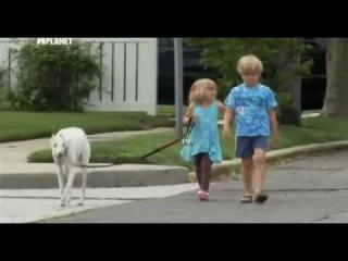 Введение в собаковедение  101 Dogs   Часть 22  Animal Planet