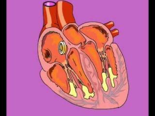 Сердечный цикл(8кл).avi