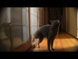 Как коты открывают двери.