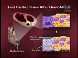 Fibroblast Growth Factor (FGF) & Stem Cells