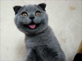 смешной кот смотреть всем лучшие приколы с животными 2013