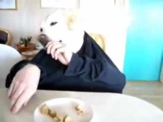 Собака завтракает(www.skaportal.be)