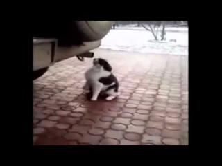 Кошка наркошка