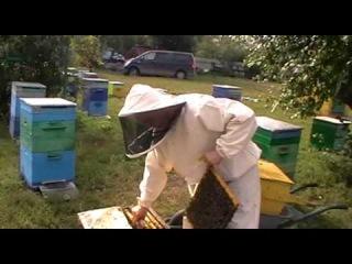 Пасека Пчелы Собираем улей в зиму