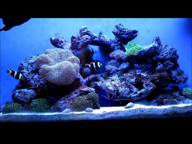 шикарный ReefMax
