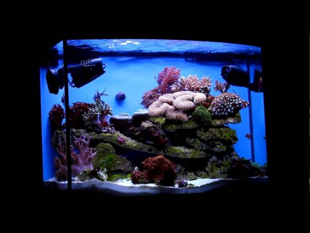 запущенный ReefMax Aquael
