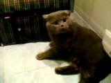 Прикольный кот) говорит мути пути и дурак