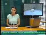 Спецоперация по спасению косолапого