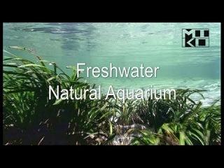 Аквариумные рыбки в природе. Бассейны рек Ориноко и Амазонка