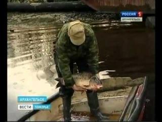 Любительское рыболовство. Шёл за семгой, а принёс