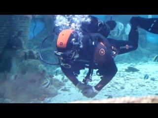 океанариум. эпизод 9. рыба-водолаз