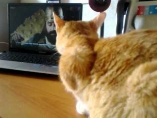 Кот смотрит великолепный век (64 серия 12 сентября!)