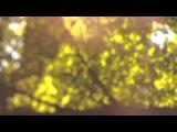Ryan Davis - Entangled Lives (Traum CD 26)