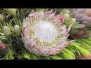 D13 2011香港花卉展覽精華 HK Flower Show-Produced By Floral Art 2000.m4v