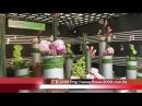 D12 香港花卉展覽2011 Hong Kong Flower Show—花藝2000製作.m4v