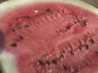 Как выращивают арбузы - Доброе утро - Первый канал