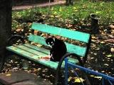 БУТЫРКА - А для вас я никто (видео-клип)