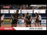 Волейбольный Кузбасс принимал Белогорье
