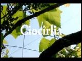 DJ Markus Lawyer & Marcel Stefanet - Ciocirlia