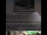 volochkova_ video