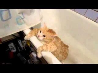 How do you bathe your cat.А как вы купаете своего кота.