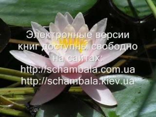 """Анастасия Новых - Афоризмы из книги """"Сэнсэй"""""""