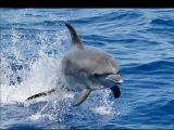 DJ Slon и Ангел А Все дельфины в ураган