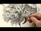 Пион в карандаше Уроки рисования с Сергеем Андриякой
