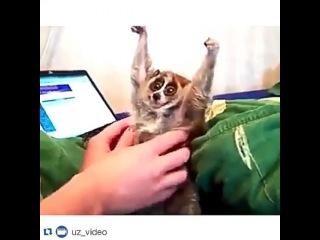 evelina_tolma4ova video