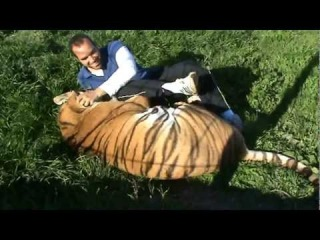 Человек и тигр ))) позитив))YO Y MI TIGRE