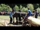 Cai nelutu de la poiana marului brasov concurs perechi la rasnov 3 iunie 2012 0740816912