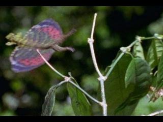 летучий дракон спасается от летающей змеи