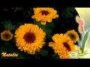 Вечность...Цветы в природе. Музыка для релаксации.m2ts