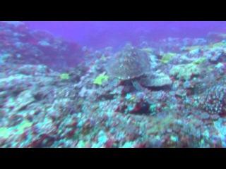 Большое путешествие вглубь океанов 3D часть5 6 OceanWorld 3D