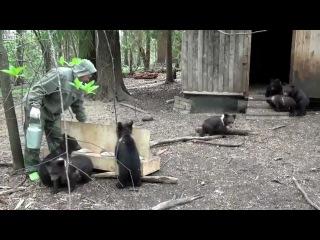Кормление медвежат на биологической станции