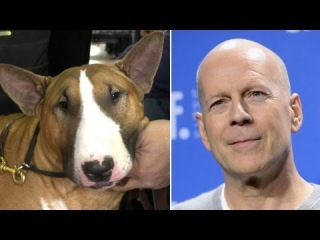 Celebrity Dog Lookalikes - Westminster Dog Show