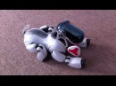 Sony Aibo ERS-7 Snoopy Home Robot Pet Dog showing the children a new trick watch?v=4pkUU9nPpNk feature=fvwrel