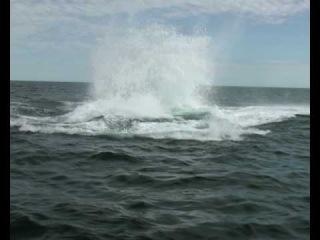 прыжок кита.avi